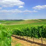 Viinilaakso Aletanjossa